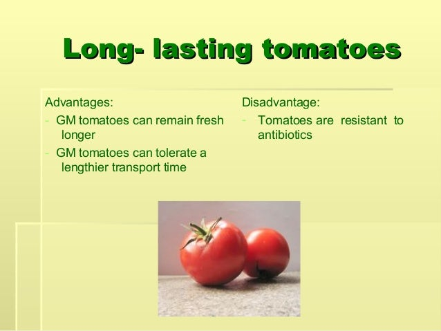 application of genetically modified organisms