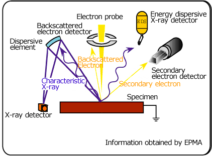 application of scanning electron microscope ppt
