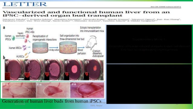 stem cells and their applications pdf