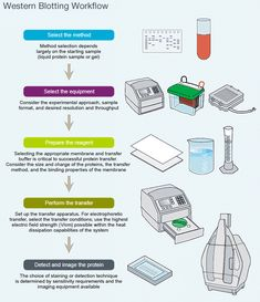 western blot applications in medical