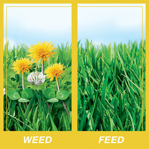 scotts weed and feed application instructions