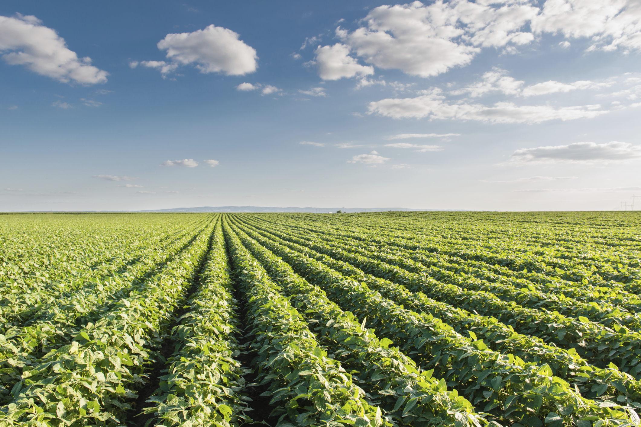 gmo application in food and agriculture